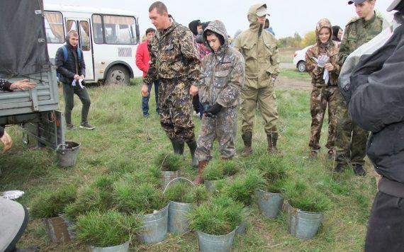 В рамках акции «Сад памяти» алтайские студенты высадили более 1500 сосен